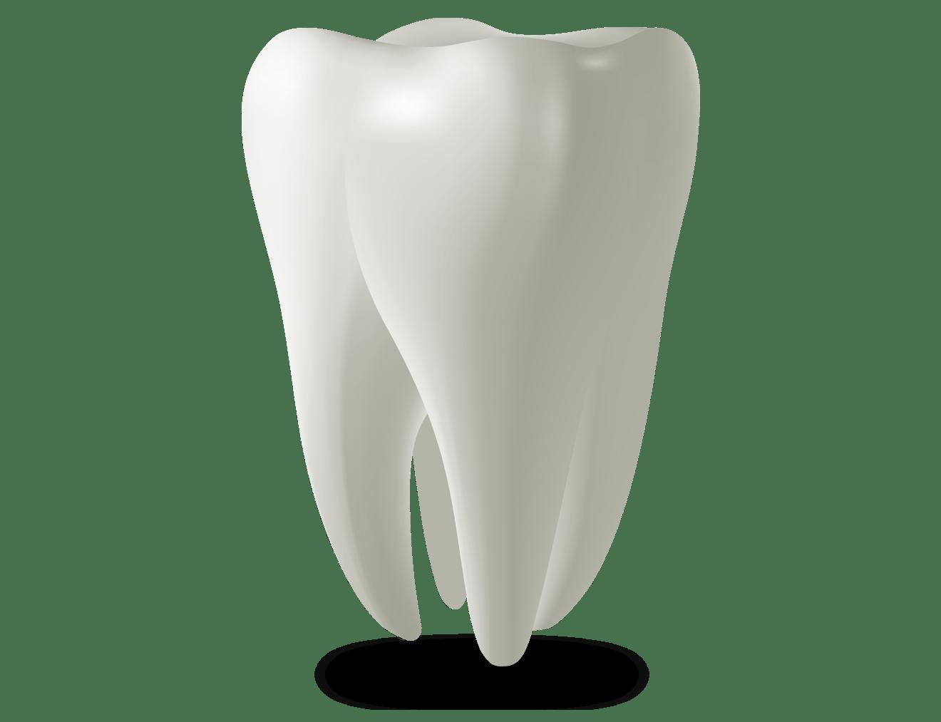 tooth model Falls Church, VA